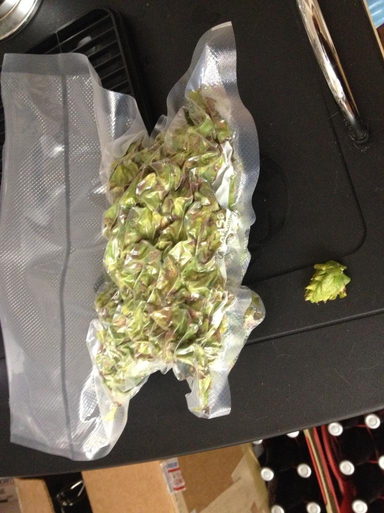 Chinook wet hops