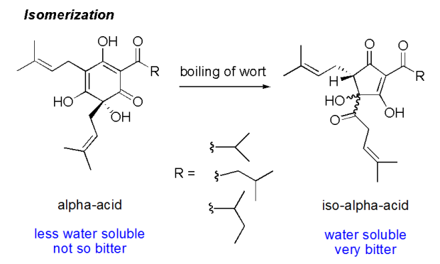 Isomerization of alpha acid humulone to iso-humulone