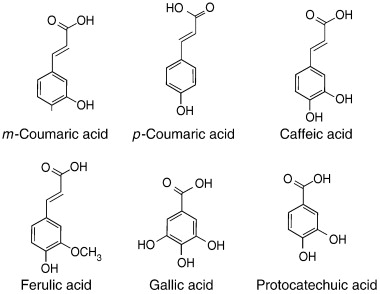 Phenolics made by L. plantarum